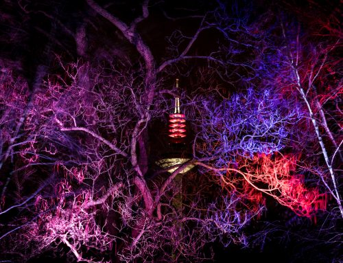 Winterlights in the palm garden Frankfurt from 15.12.2018 to 21.01.2019